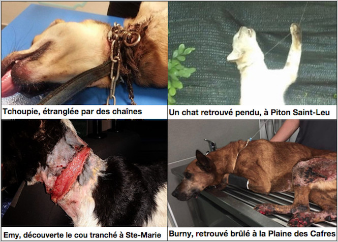 Maltraitance animale : 73 associations interpellent les décideurs de La Réunion