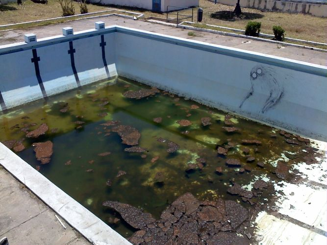 Le barachois la piscine de la discorde for Algue dans piscine