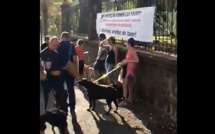 """Dogs sitting"": Une manifestation contre l'errance animale"